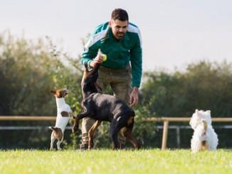 jak zostać trenerem psów