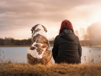 Jak zostać behawiorystą psów