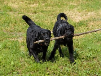 Kurs na trenera psów