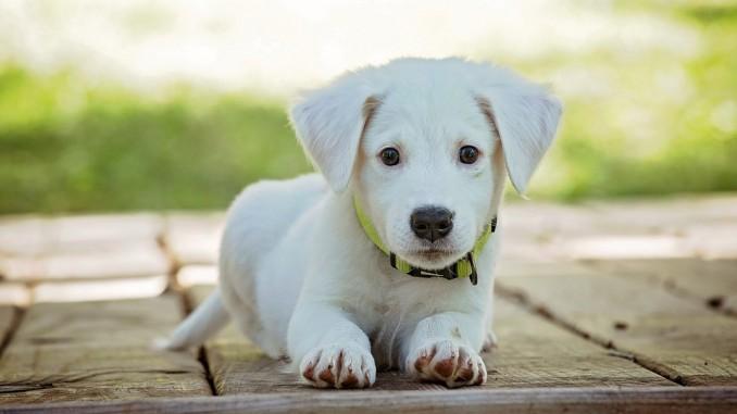 Zwierzęta wykorzystywane do terapii