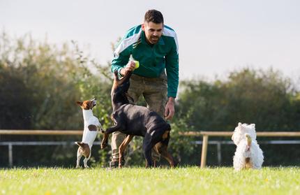 Kurs trener szkolenia psów online